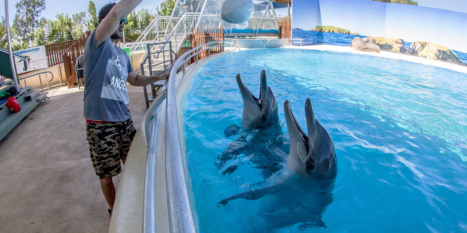 Swimming With the Dolphins at Coffs Harbour
