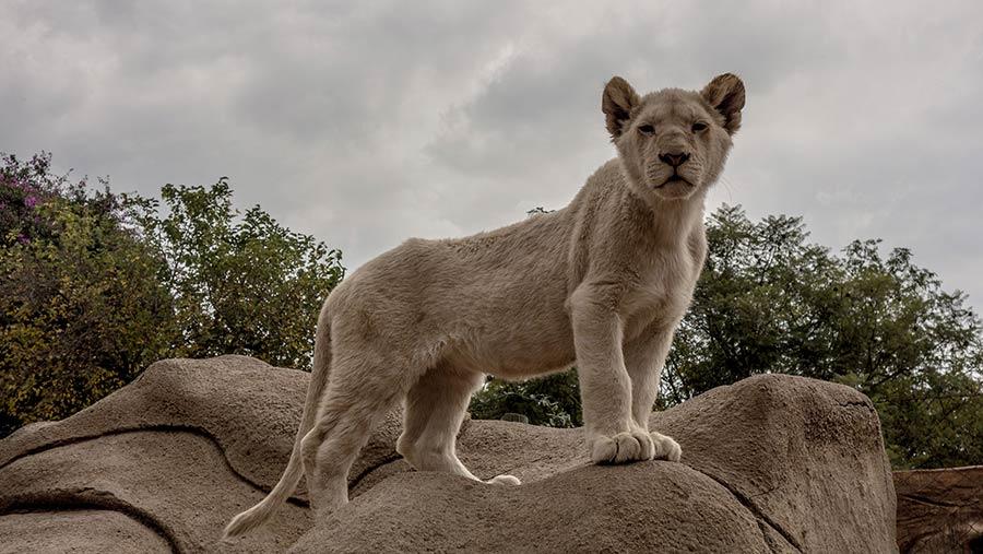 Johannesberg Lion Park